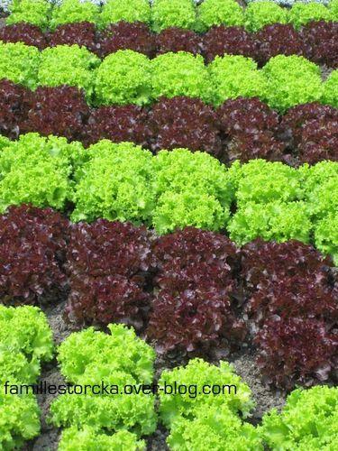 wesserling salades