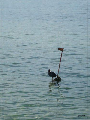 bord-eau-07-10--4--w--800x600-.jpg