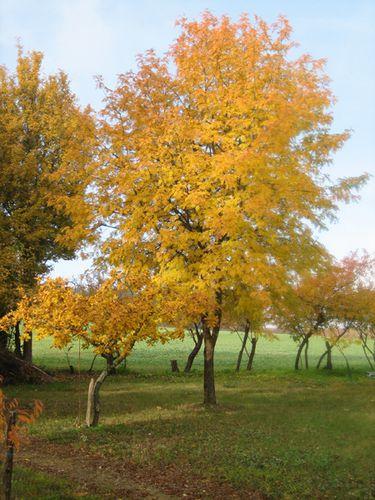 4 cormier automne