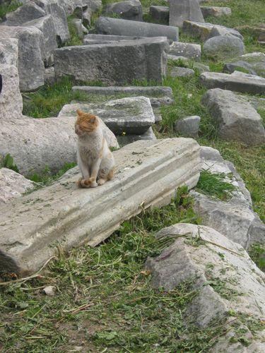 Turquie-mars-2012-074.jpg
