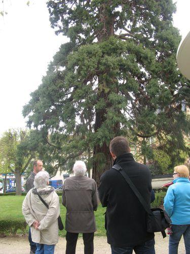 OT visite nature dans la ville séquoya.