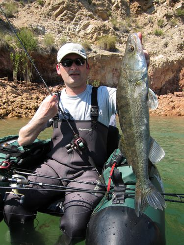 Pre spawn session part 1 le blog ftf for Cisco s sportfishing fish count