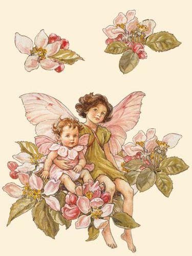 cicely-mary-barker-the-apple-blossom-flower-fairies