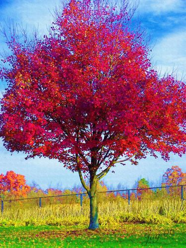 arbre-rouge-copie-1.jpg