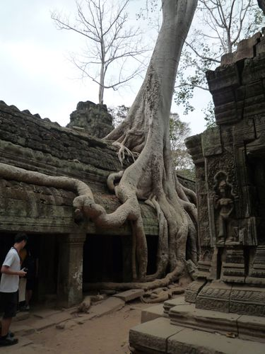 Cambodge 2010 Siem Reap Temple Ta Prohm (16)
