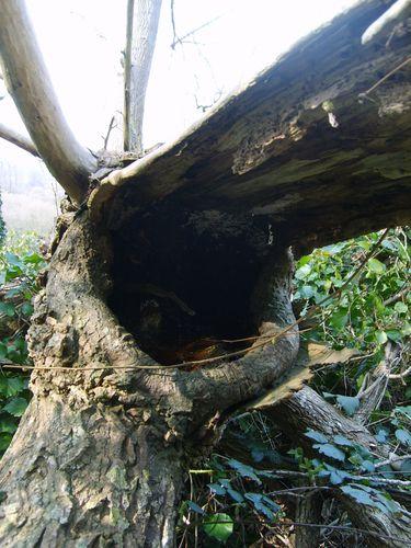 arbre mort 1