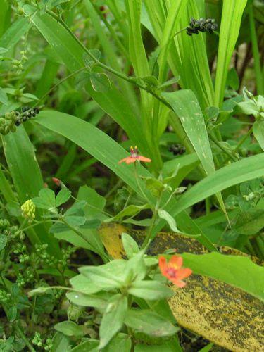 Petites-fleurs-rouges-45.jpg