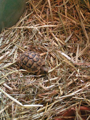 Petites-tortues-4-3-13-4-0-.JPG