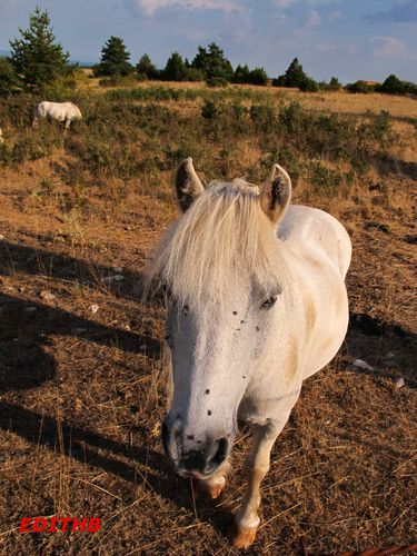 CHEVAL (1)