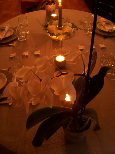TABLE-PAPILLONS-021.jpg