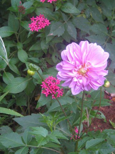 fleurs-de-saison 0449