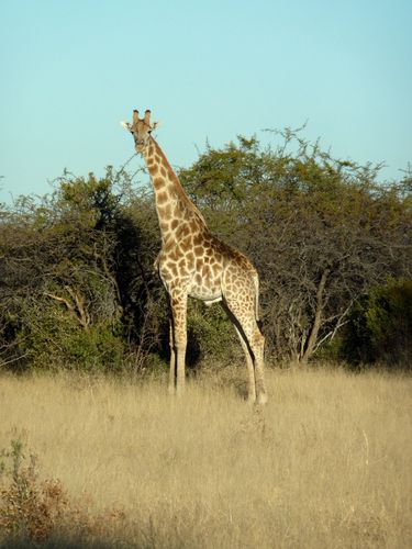 01 Grootfontein - Camping Animaux 04