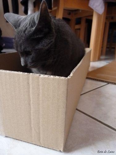 Fête chat 2