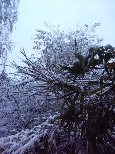 feerie hivernale2