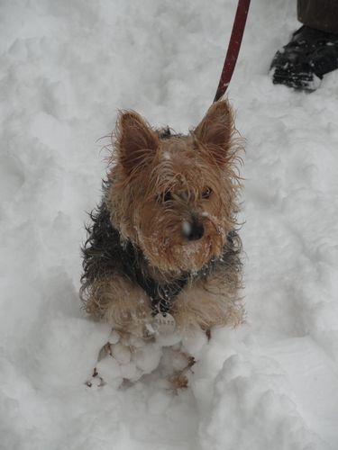 2010-19-12 caen sous le neige 047