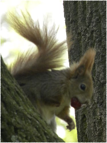 ecureuil 5