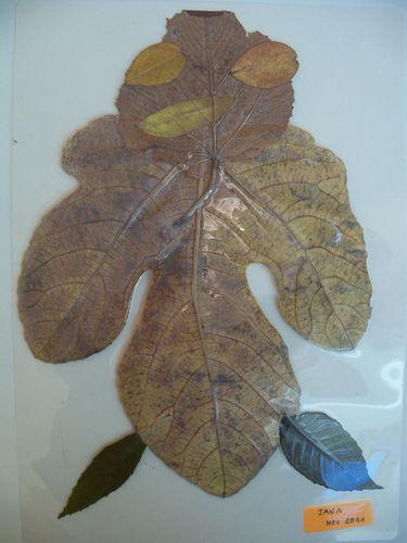 bonhommes-feuilles-003.jpg