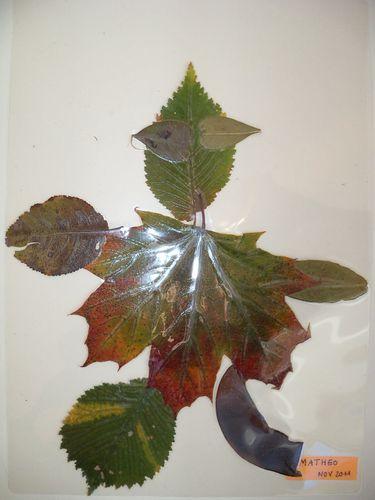 bonhommes-feuilles-007.jpg