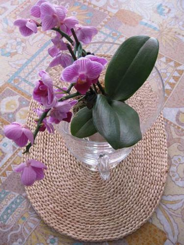 POT-ORCHIDEE 2