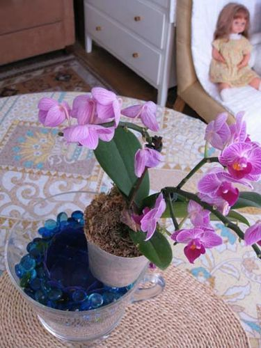POT-ORCHIDEE 7