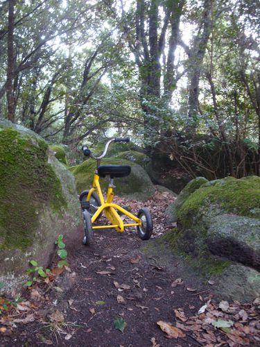 tricycle-dans-les-bois--2-.JPG