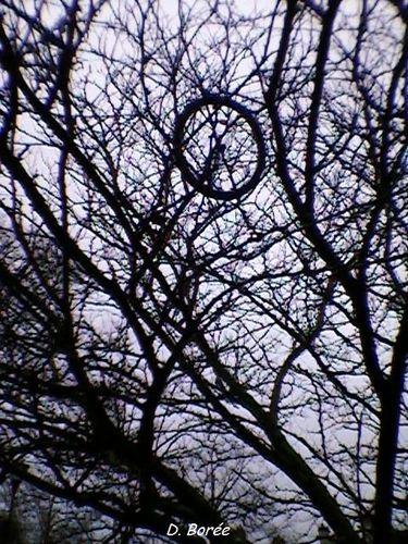 Roue arbre25
