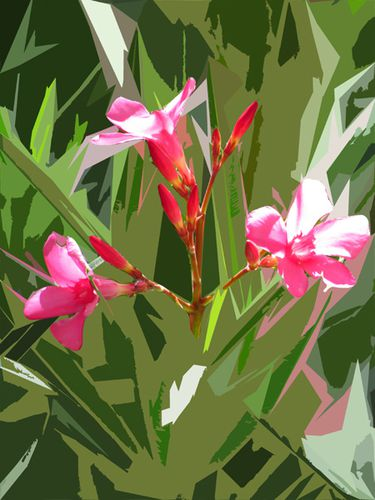 Laurier-rose.jpg