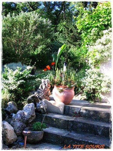 mon-jardin.jpg