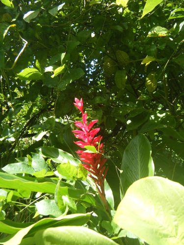 Martinique 055