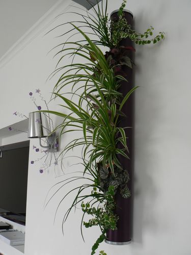 Evolution du tube vegetal le blog de v ro bricolo - Mur vegetal interieur ikea ...