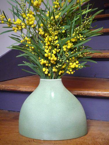 mimosabd.jpg