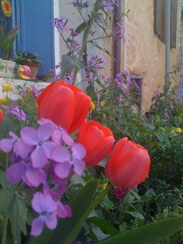jardin-0339.JPG