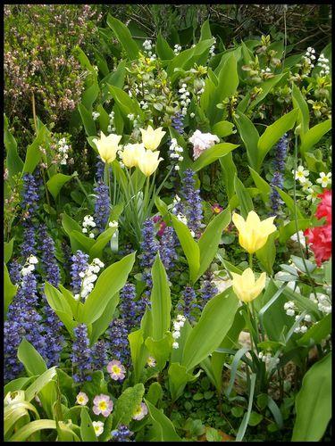 Mini-tulipes et muguet 01