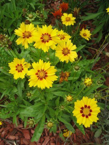Fleurs (14)