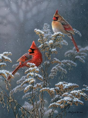 Cardinals-in-the-snow.jpg