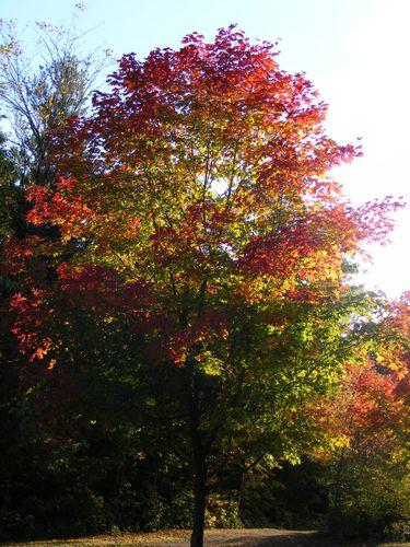 automne-quebec5.jpg
