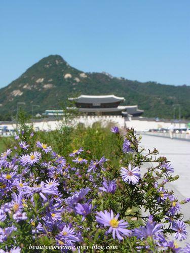 place-Gwangwamun-5.jpg