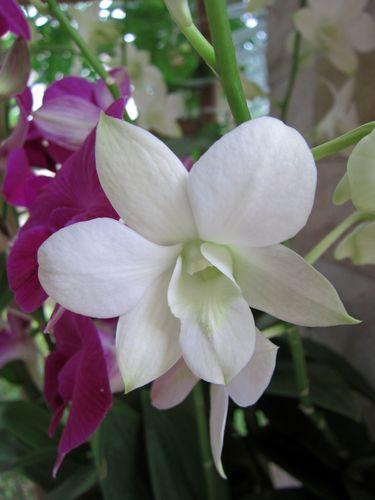 Fleurs et orchidées 07