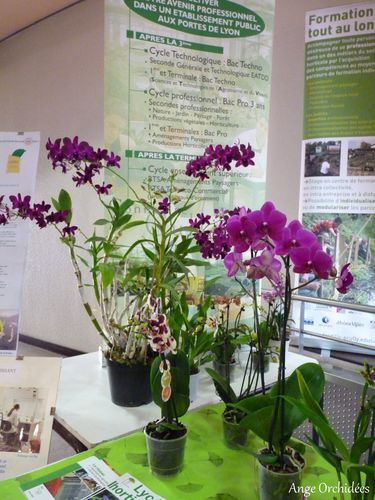Expo-orchidees-Ecully-2012--1-.JPG