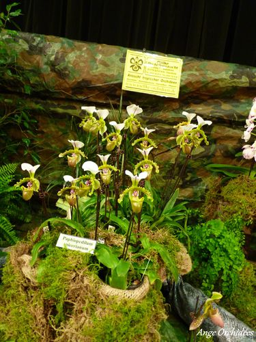 Expo-orchidees-Ecully-2012--21-.JPG