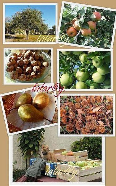 fruits-TD2R.jpg