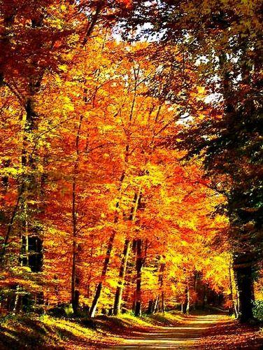 Foret-en-automne.jpg