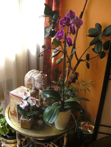 Orchidee-2.jpg