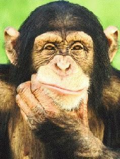 chimpanze-pensif-copie-1.jpg