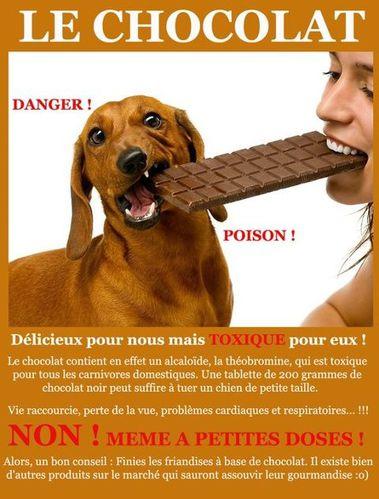 chien_pas_chocolat.jpg