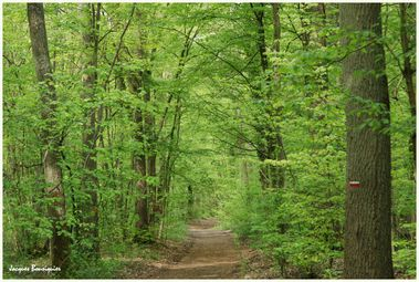 Chantilly foret 1