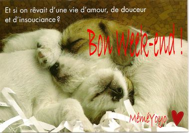 bon-week-end-chien.jpg