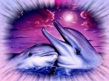dauphin-rose.jpg
