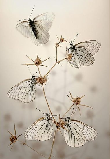 papillons-tiges-111.jpg