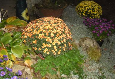 Chrysanthemes-05.JPG